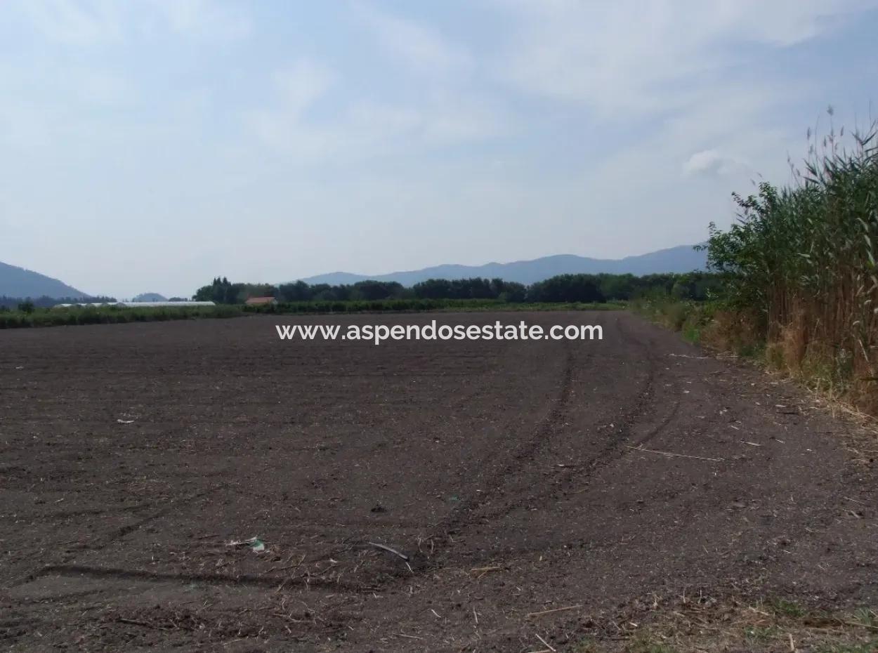 Farm For Sale In Dalyan Eskikoy Eskikoy Oriya 14,900M2 Plot For Sale Field