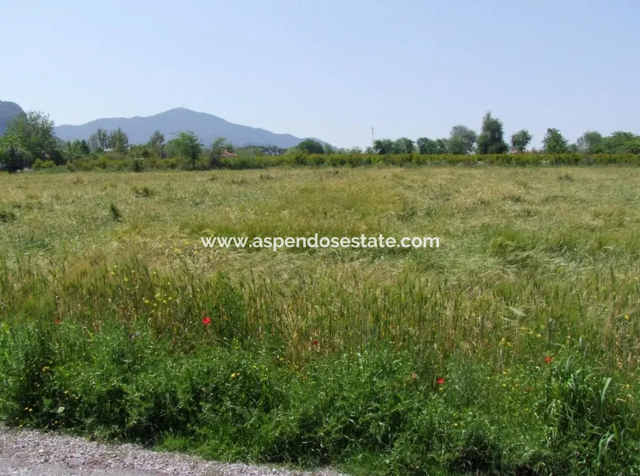 Pomegranate For Sale In Dalyan Garden 8,600M2 Plot Agricultural For Sale Bargain