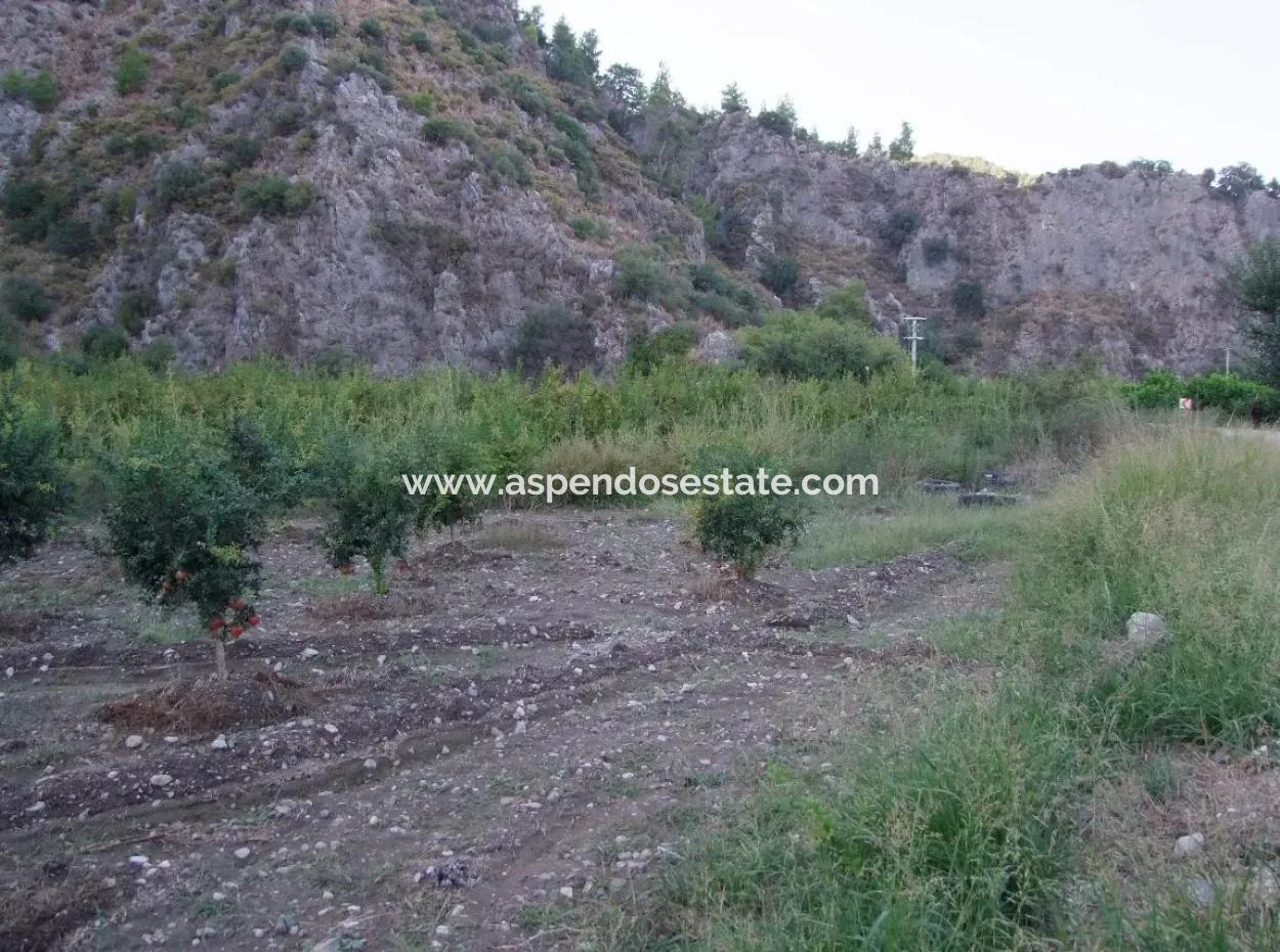 Plot For Sale In Pomegranate Garden For Sale In Oriya Mergenli Mergenli
