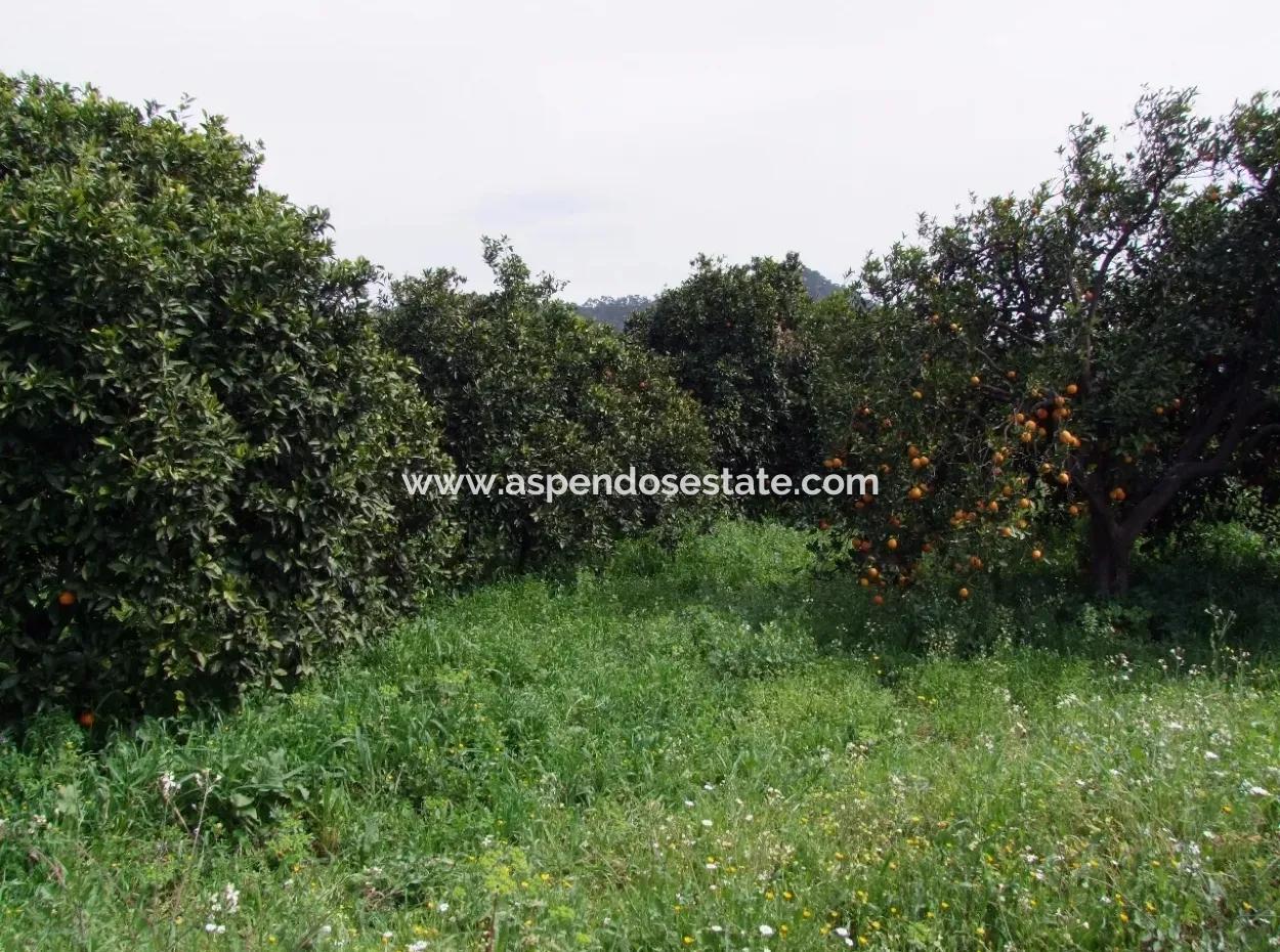 For Sale In Orange Grove 24,000M2 For Sale Near The Sea Garden For Sale Bargain