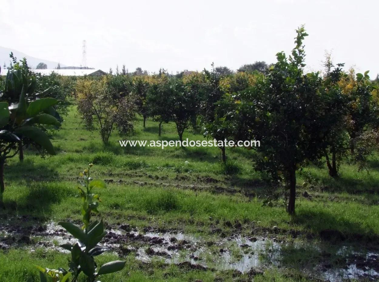 Gurpinar In Dalyan For Sale Dalyan Plot For Sale In Yatirimlik 13272M2