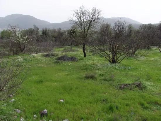 In Incirkoy Uzumlu Fethiye Plot For Sale Farm For Sale In Incirkoy