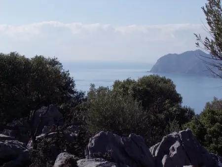 With Sea Views For Sale In Dalyan Çandır 16,769M2 Estate Estate Olive Grove Farm For Sale In Bargain