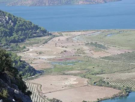 Farm For Sale In Köyceğiz And Dalyan For Sale Dalyan Channel Zero In The Quarter