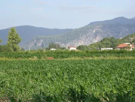 Farm For Sale Near The Centre Of Dalyan,14, 612M2 Farm For Sale