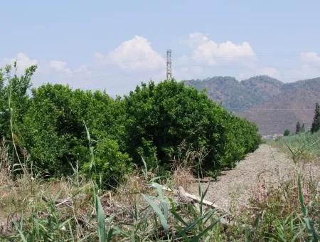 Lemon Garden For Sale In Sarigerme Oriya Oriya Zero-Path 83,670M2 For Sale In Farm And Garden