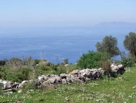 For Sale In Faralya Faralya With Sea View And 11,286M2 Land For Sale Tourism
