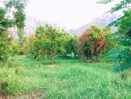 Archer In The Archers Plot For Sale For Sale In Marmarli 1,500M2 Plot For Sale