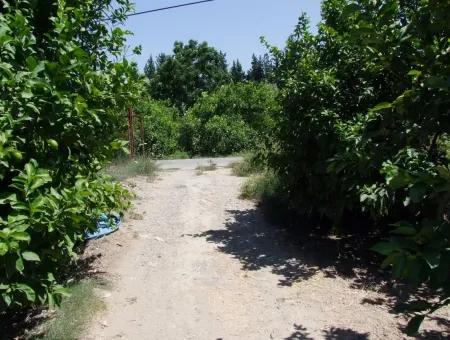 For Sale Land Plot For Sale In Fevziye Oriya Fevziye