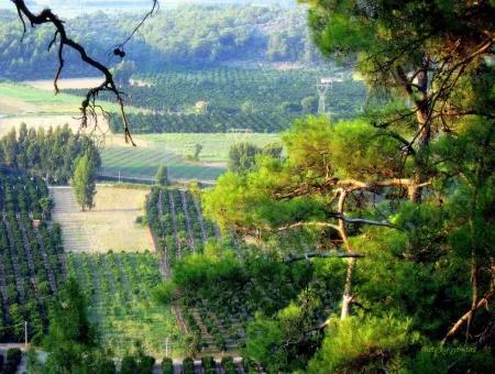 Gökçe Gökçe 21671M2 Farm For Sale For Sale