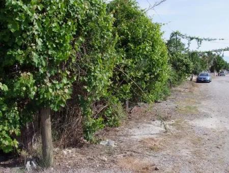 1500M2 Land For Sale In Dalyan Gulpinar, Dalyan Plot For Sale 40 Right Around The Corner