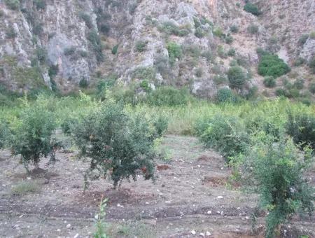 Plot For Sale In Pomegranate Garden For Sale In Oriya Mergenli Mergenli