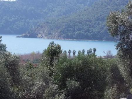 13000M2  For Sale With Sea Views For Sale In Ekincik