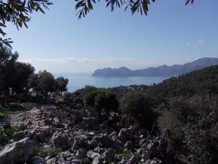 Çandır 5367M2 Farm Land For Sale Sea Views
