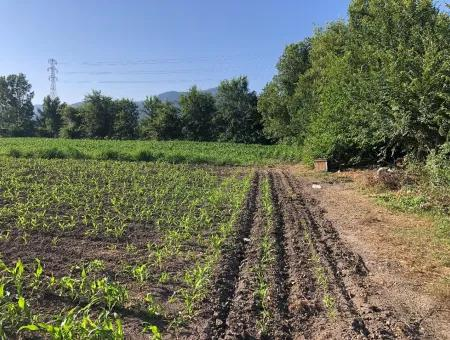 2200M2 Plot For Sale In Dalyan For Sale Dalyan
