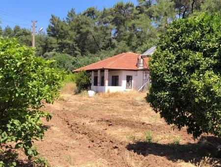 Garden For Sale In Gokce Akyaka, Near The Sea, A 38,000M2 Plot For Sale