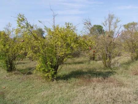 Güzelyurt Land For Sale Village Built 6670M2 Land For Sale