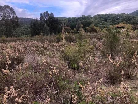 Land  For Sale Zero To Çamlı Canal 28768M2 Land For Sale With Sea View In Camlida