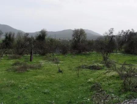 In Incirkoy Uzumlu Fethiye Plot For Sale Farm For Sale In Incirkoy