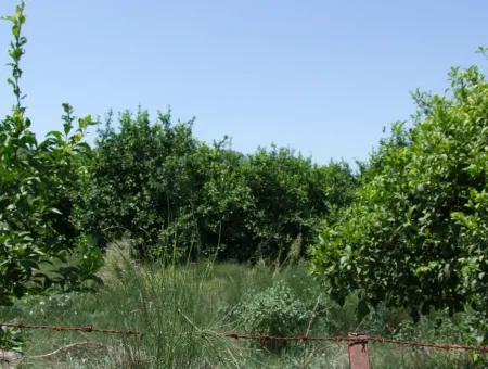 Land For Sale In Fevziyede 1197M2 Land For Sale