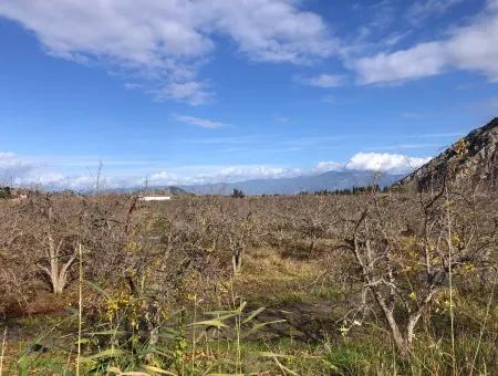 Land For Sale In Dalyan Istuzu Yollu On 24,000M2 Pomegranate Garden For Sale