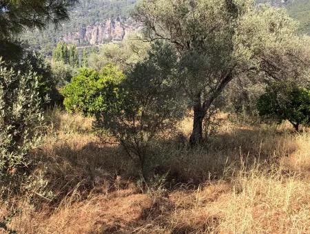 Land Field For Sale In Köyceğinz Yangi 9406M2 Land For Sale