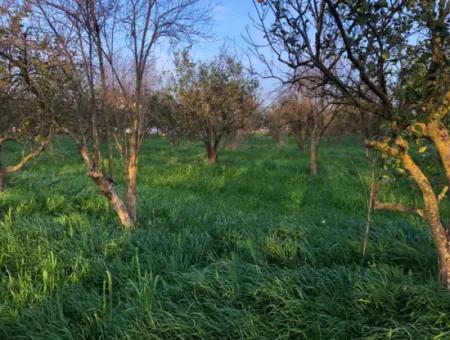 In Okçular Land For Sale 4707M2 Land For Sale