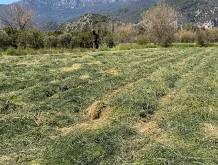 3700M2 Land For Sale In Dalyan